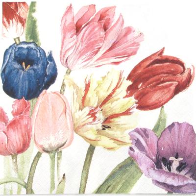Salveta Amsterdam tulipani C35