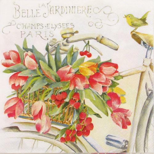 Salveta Belle la Jardiniere C43