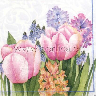 Salveta Tulip C54