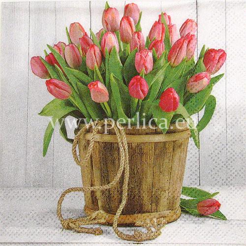 Salveta Tulips in bucket C42