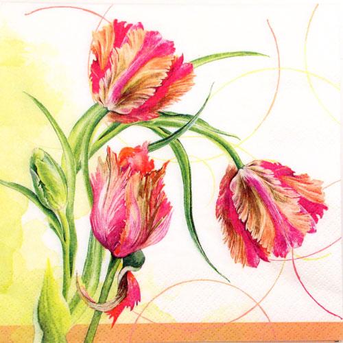 Salveta Parrot Tulip, C64