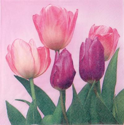 Salveta Pet tulipana C36