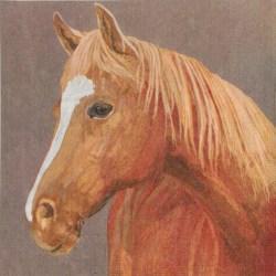 001sa-konj