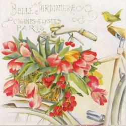 Salveta-Tulipani-na-biciklu-1