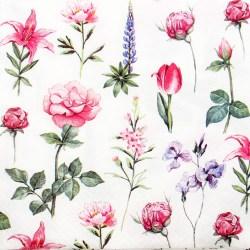 Salveta-cvijetici9