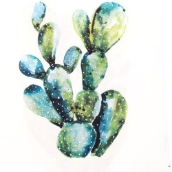 Salveta-kaktus