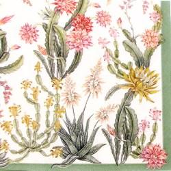 Salveta-kaktusi6