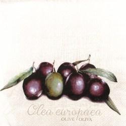 Salveta-oliva-europea
