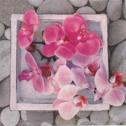 Salveta-orchids-in-frame