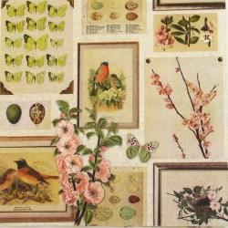 Salveta-slike-na-zidu