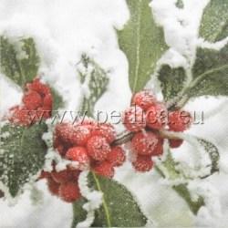 Salveta-smrznuta-2