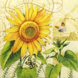 Salveta-suncokret