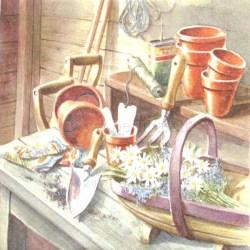 Salveta-vrtlarica