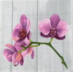 Salveta_Orhideja_4f5268f450483.jpg