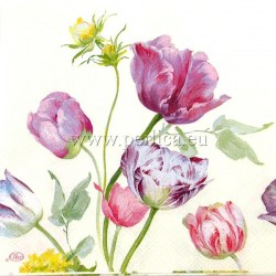 Tulipani22