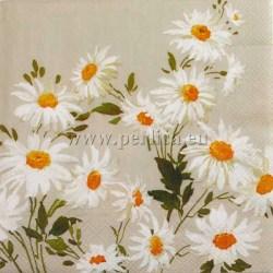 cvijece-margarete