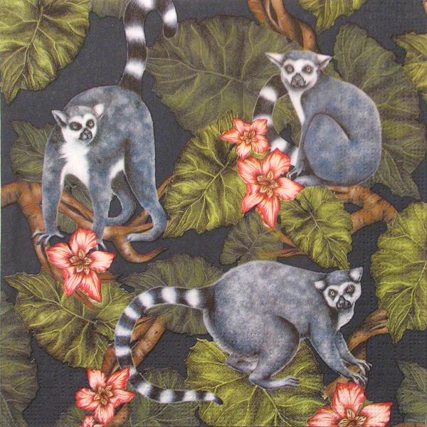 Salveta Midnight Madagaskar J1
