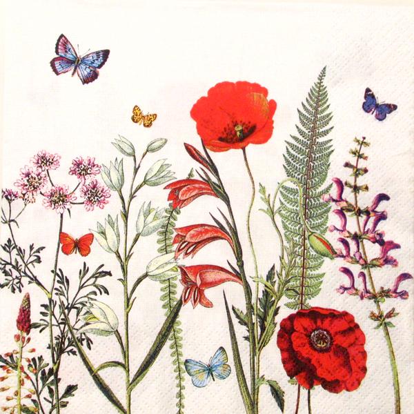 Salveta Meadow in Bloom CM3